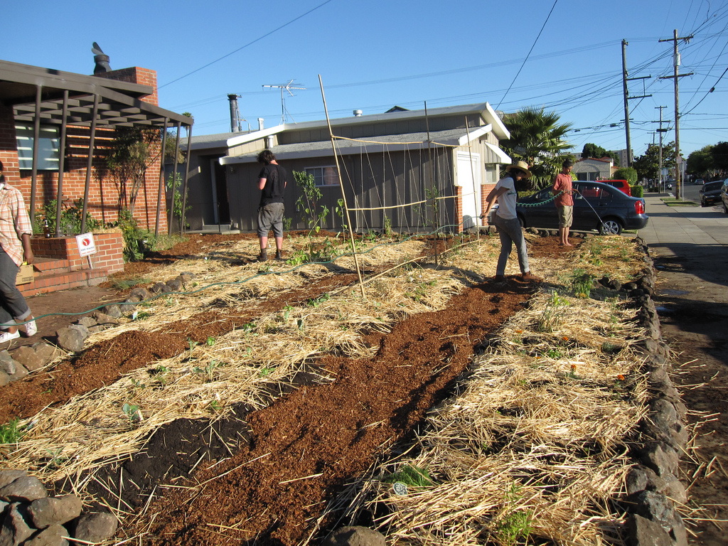 Straw Mulch to hold moisture, decompose and provide habitat for